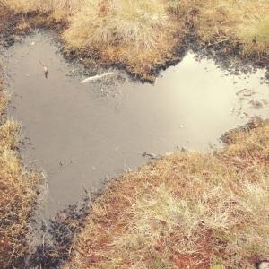 Vannpytt formet som et hjerte