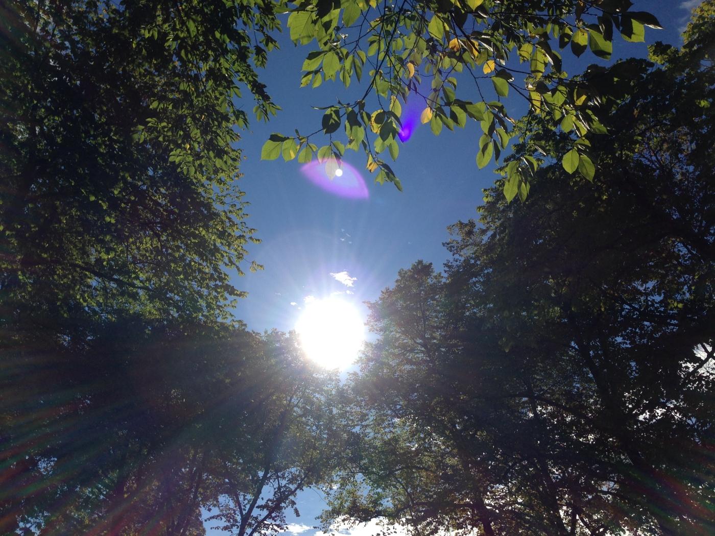 Illustrasjonsfoto: Sol som bryter gjennom trærne