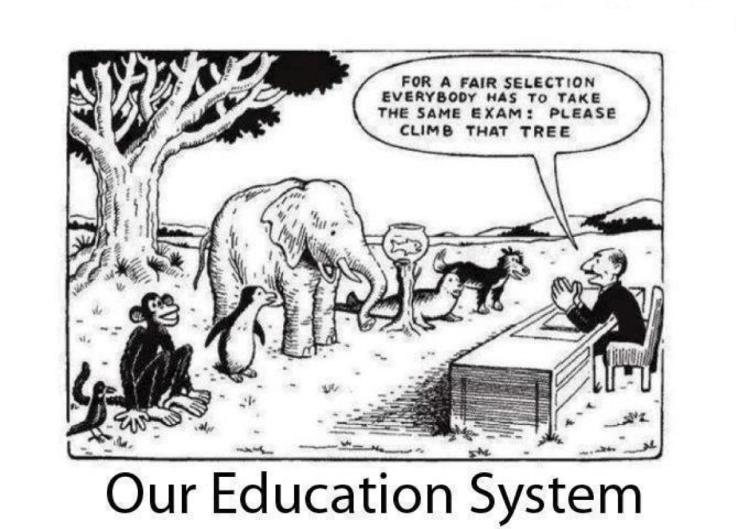 Mange har vel sett dette bilde der de ulike dyrene skal ha samme eksamen. Klatre opp i treet. Det er vel nettopp en god illustrasjon på hva Todd Rose ønsker seg bort fra.