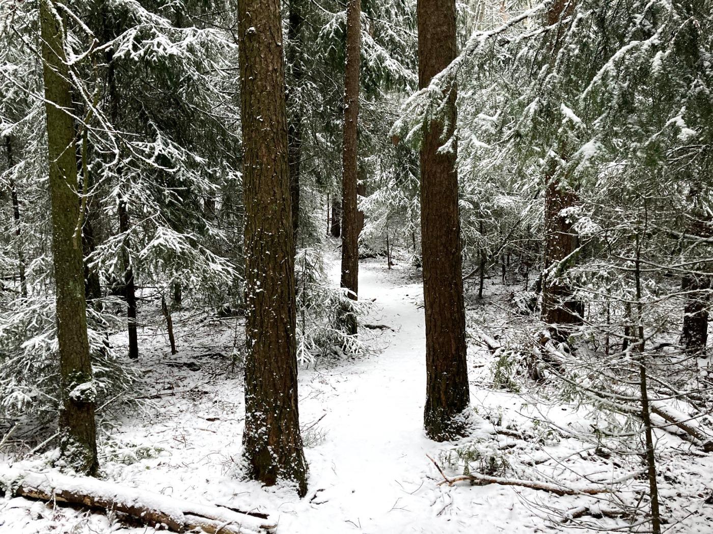 Skog, sti og snø